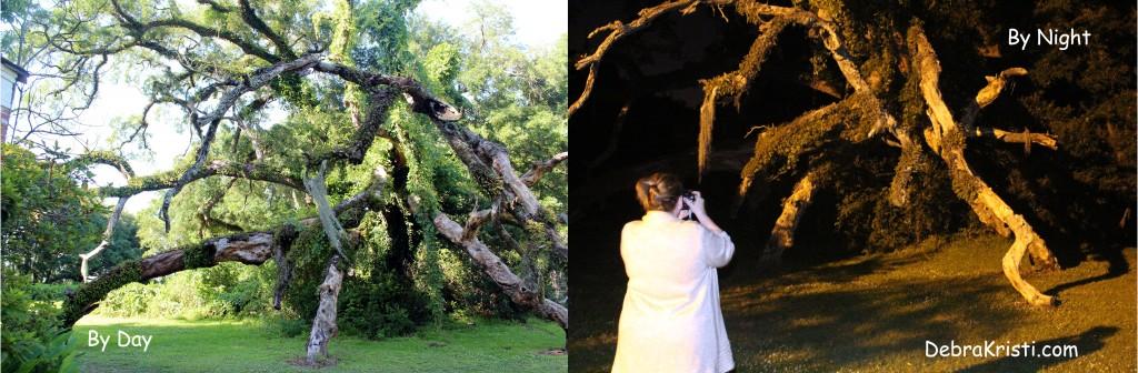 Gaurdian Tree in Journey to Madewood Post by Debra Kristi, Author